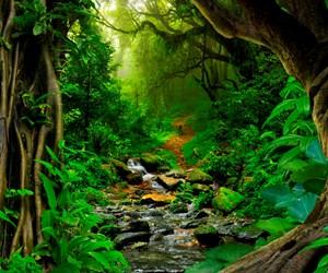 Amazon-Ormanlari-iStock-625599832.jpg