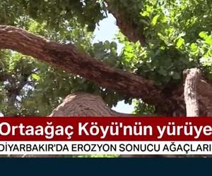 Yüzüklerin Efendisi filmindeki yürüyen ağaçları andırıyor