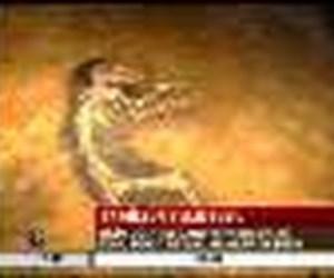 47 milyon yıllık fosil