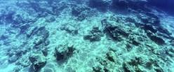 deep-sea_650x400_51456204613