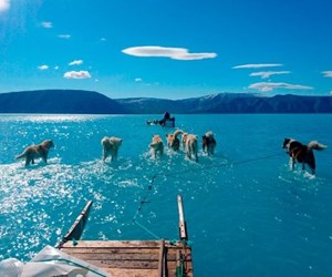 photo-of-sled-dogs-walking-through-water-shows-reality-of-greenland-s-melting-ice-sheet__709679_.jpg