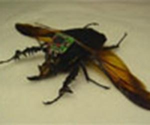 Robo-böcek test uçuşunda