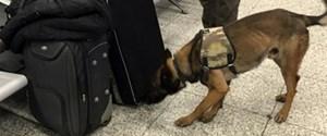 avusturya-polisi-havalimaninda-turk-yolculari-10147858_9506_o