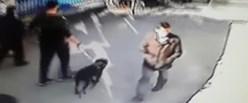 pittbull-saldırı