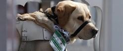 Rehber-köpeğe-akreditasyona-büyükelçiden-tweetli-teşekkür
