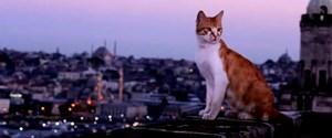 kediler-türkiye.jpg