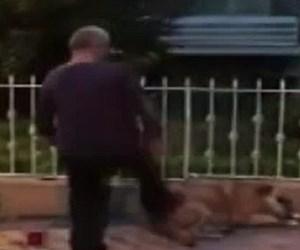 kadıköy köpek.jpg