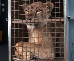 sirk-aslan.jpg
