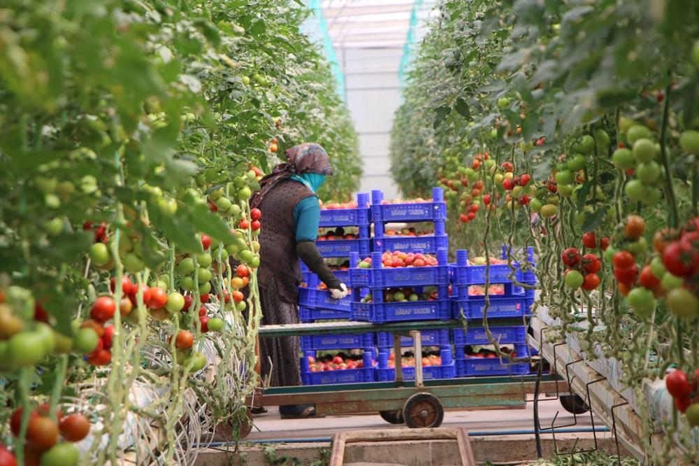 Elazığ'da topraksız tarım, kadınlara iş kapısı oldu - 9