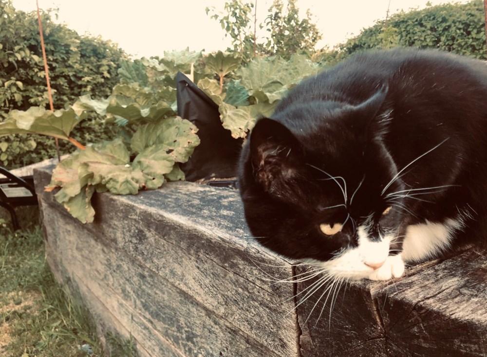 Diplomat kedi Palmerston İngiltere Dışişleri Bakanlığı'ndan emekli oldu - 10