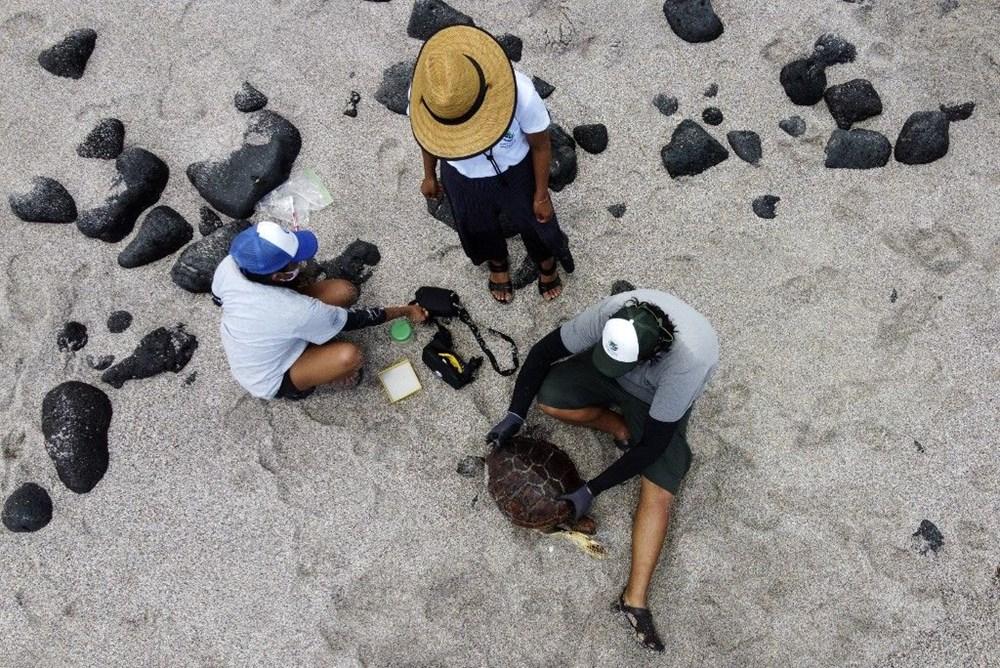 100 yıl önce soyu tükendiği düşünülen dev kaplumbağa Galapagos Adaları'nda bulundu - 4