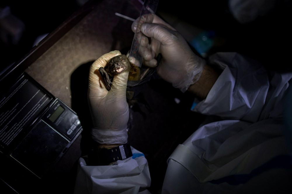 """""""Virüs avcıları"""" bir sonraki pandemiyi önlemek için gece gündüz çalışıyor - 13"""