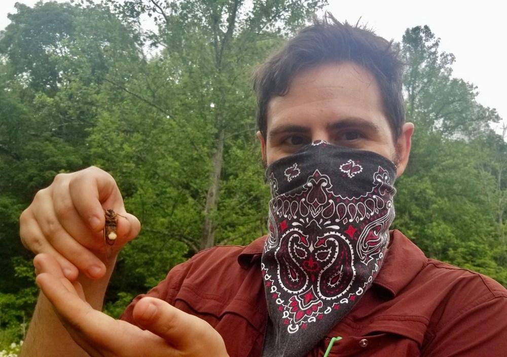 ABD'de corona virüsün ardından zombi ağustos böceği tehlikesi - 6