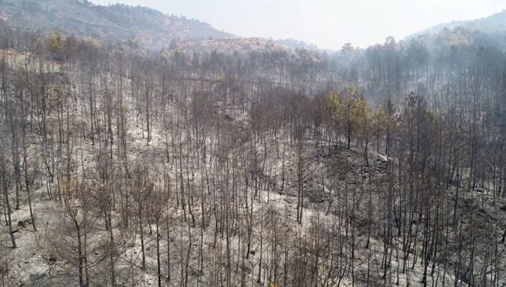 Göcek ve Dalaman yeniden ağaçlandırılıyor