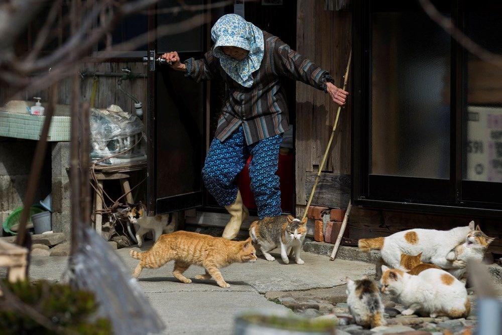 Japonya'daki kedi adası: Aoshima - 15