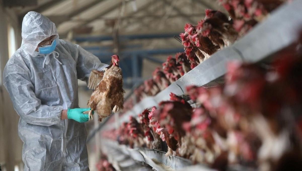 Japonya'nın Kagawa eyaletinde kuş gribi vakası