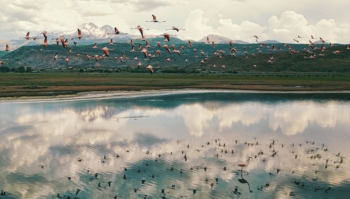 Flamingolar Hürmetçi Sazlığı'na renk kattı