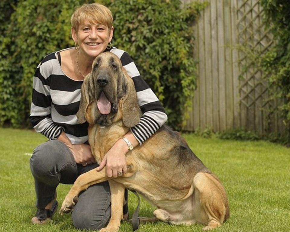 Junior'ın babası Fortitude, 2009'da 'cinsinin en iyi köpeği' seçilmişti.