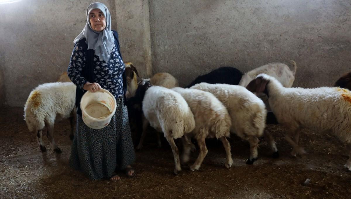 'Kadınsın yapamazsın' dediler, kendi çiftliğini kurdu