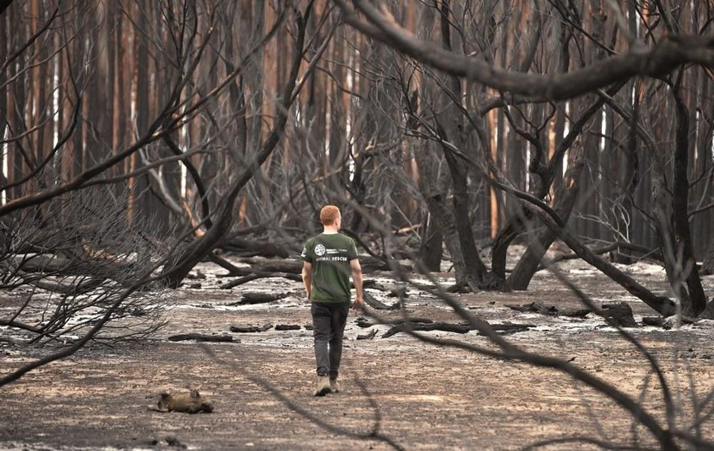 Avustralya'daki yangınlar 3 milyar hayvanı etkiledi - 10