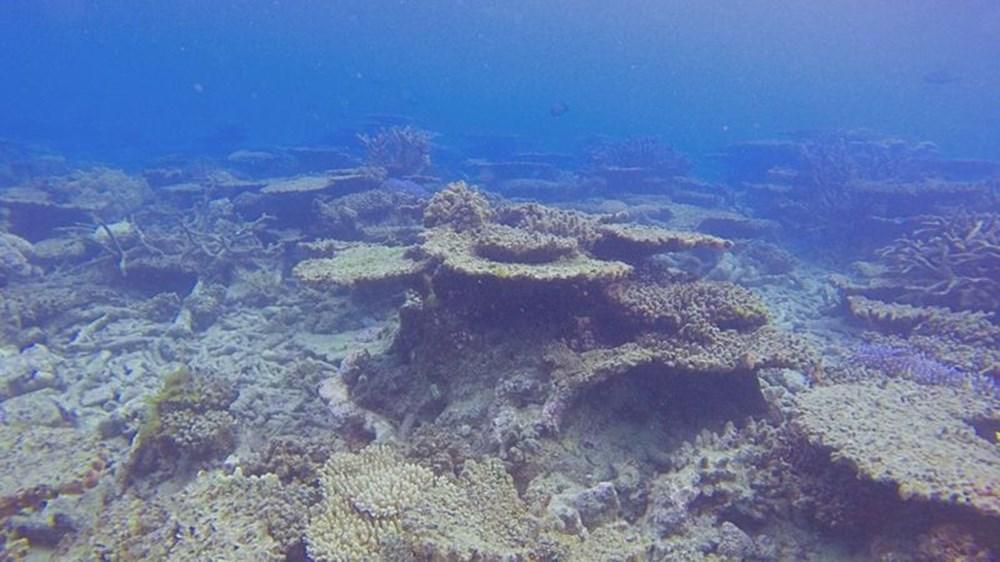 İklim değişikliği, Büyük Set Resifi'ndeki mercanların yarısını yok etti - 1