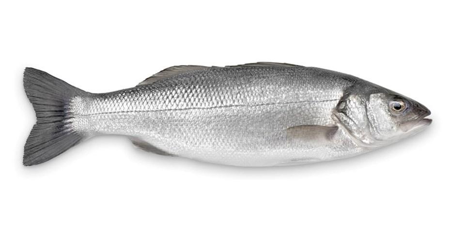 Hangi balık, hangi ayda yenmeli? (Balığın tazesi nasıl anlaşılır?) - Sağlık  Haberleri | NTV