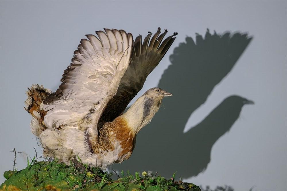 Van'da yaban hayvanları tahnit sanatıyla müzede tanıtılacak - 41