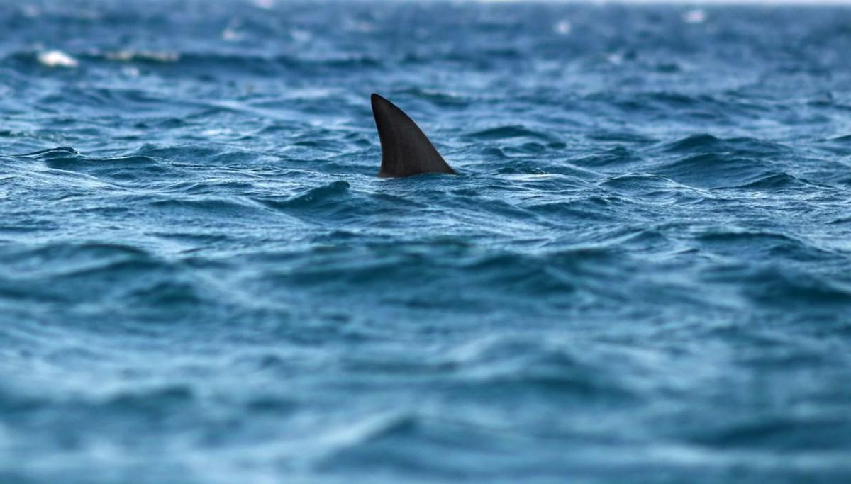 Avustralya'da bir kişi köpekbalığı saldırısı sonucu yaşamını yitirdi