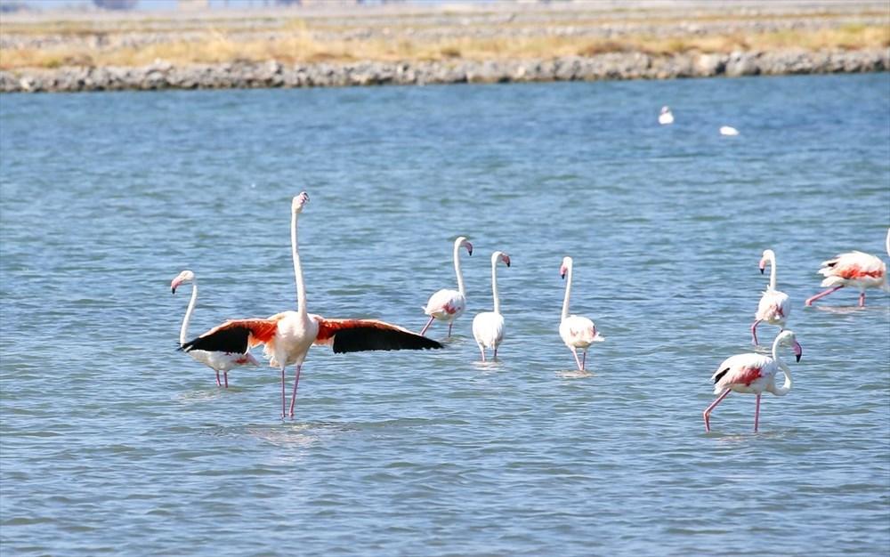 İzmir Kuş Cenneti'nde 18 bini aşkın yavru flamingo kreşte uçma hazırlığı yapıyor - 21