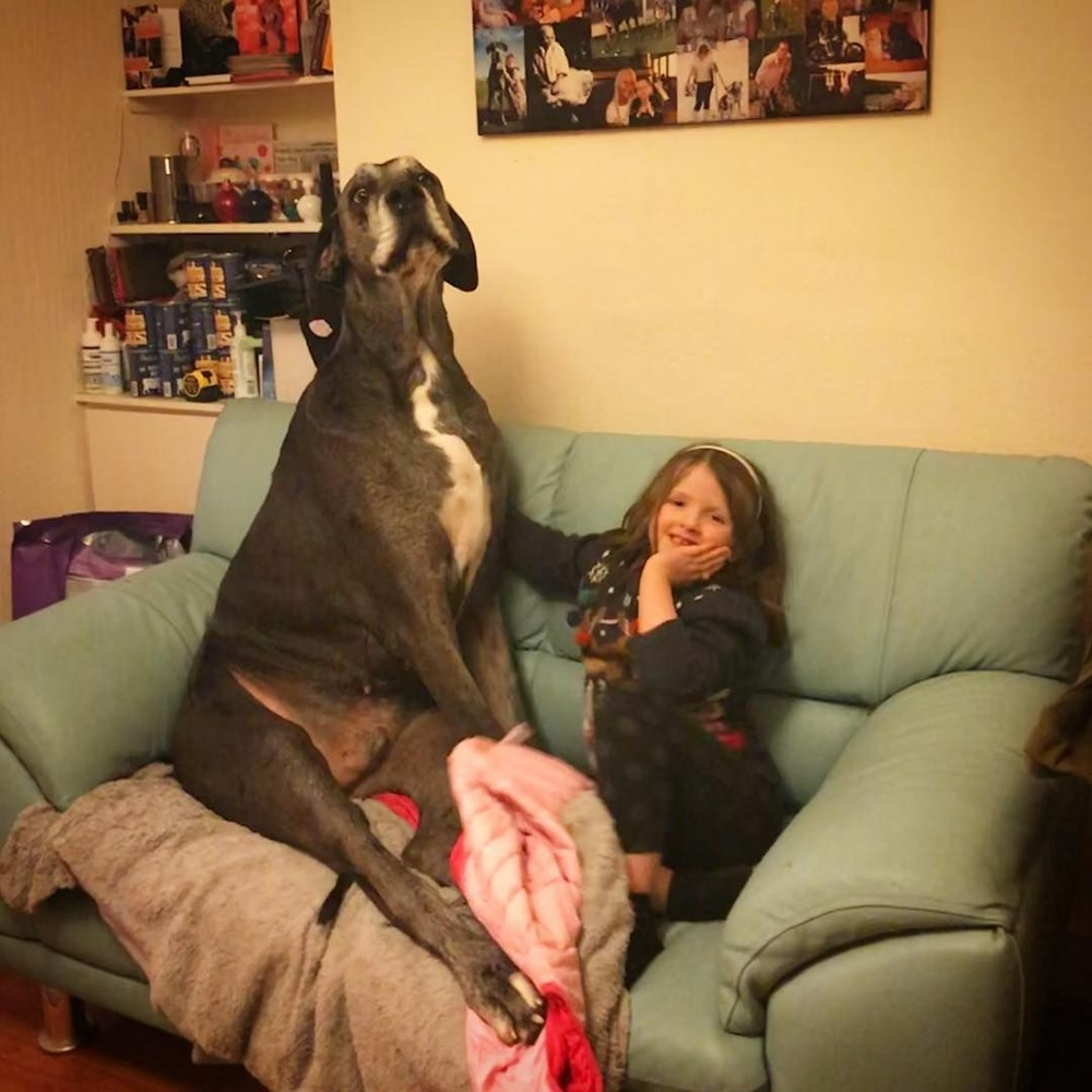Dünyanın en uzun köpeği Freddy hayatını kaybetti - 12