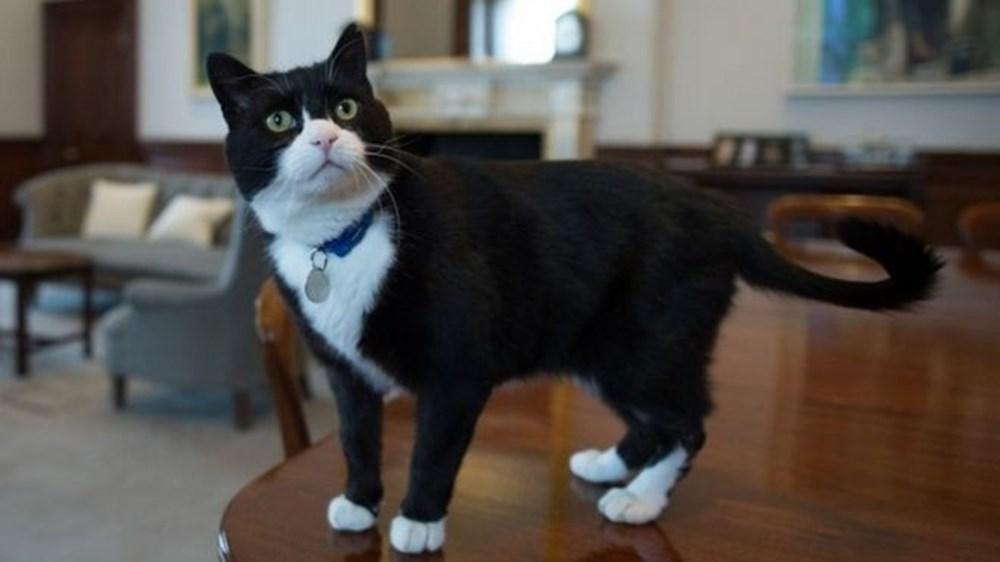 Diplomat kedi Palmerston İngiltere Dışişleri Bakanlığı'ndan emekli oldu - 5