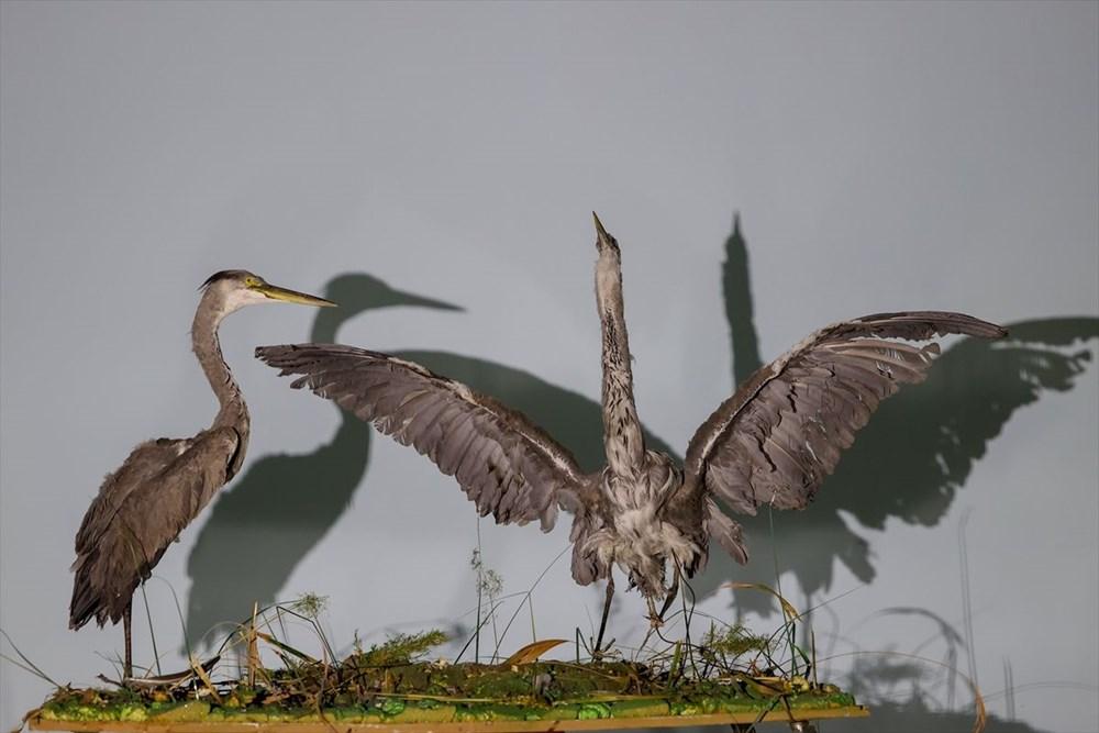 Van'da yaban hayvanları tahnit sanatıyla müzede tanıtılacak - 43
