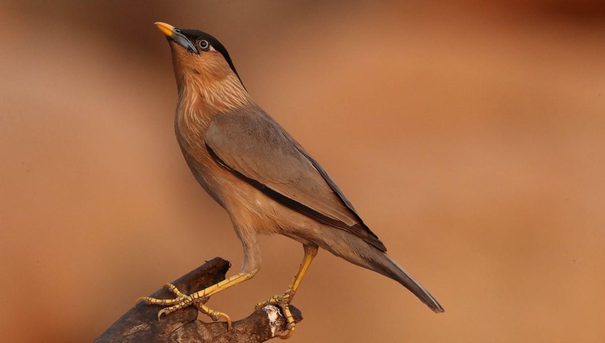 2020'de dünyada en çok kuş türünü bir Türk fotoğrafladı