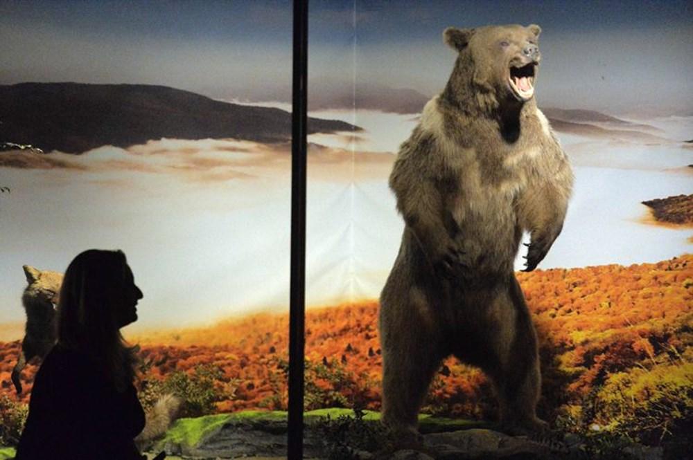 Nadir tabiat varlıklarını gelecek nesillere taşıyan müze: Yenice Doğa ve Hayvan Müzesi - 2