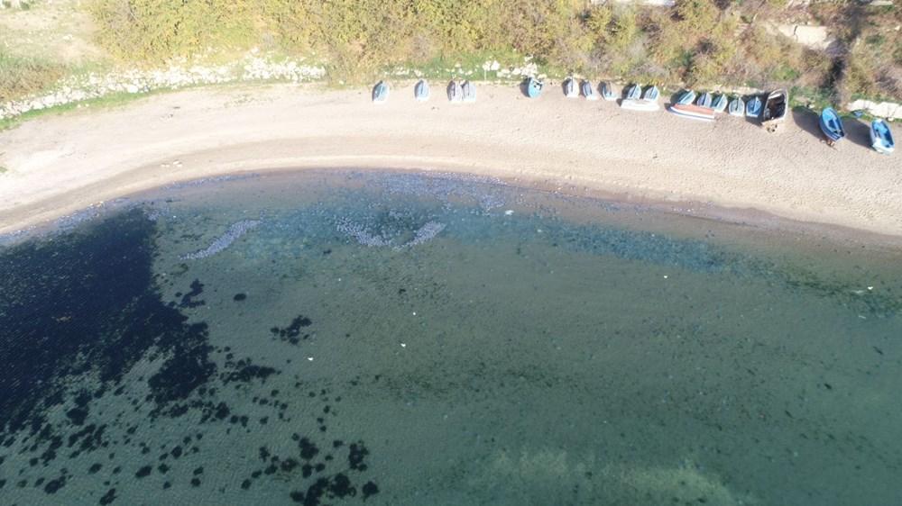 İstanbul'da korkutan dev denizanaları: Her biri en az bir kilo ağırlığında - 14