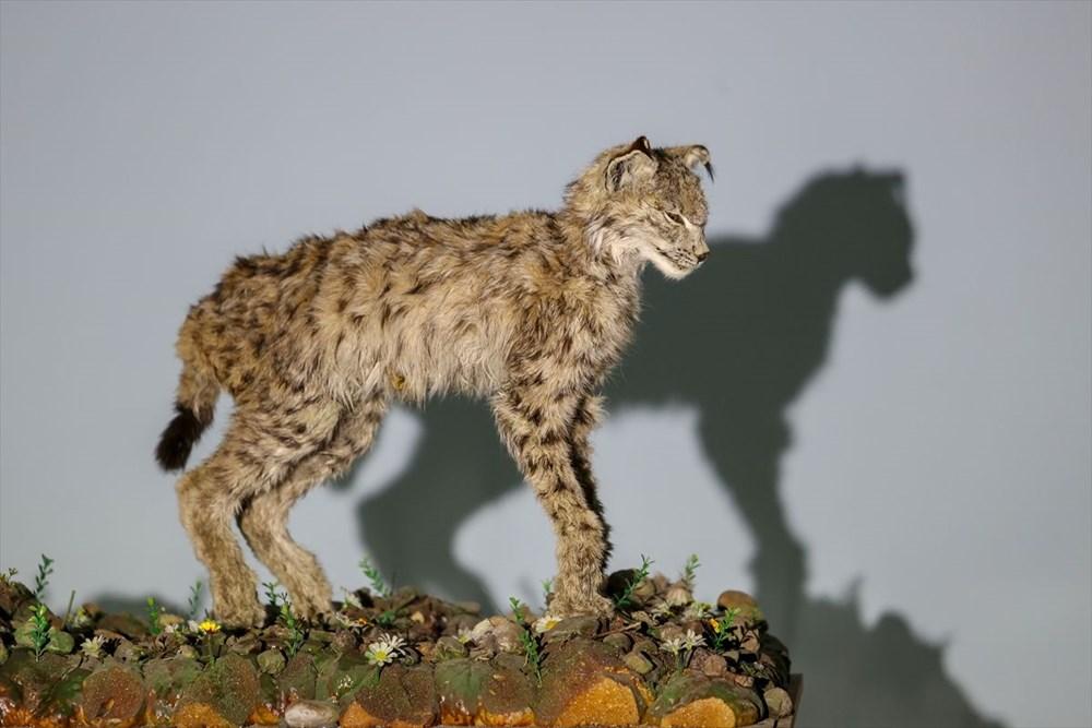 Van'da yaban hayvanları tahnit sanatıyla müzede tanıtılacak - 34