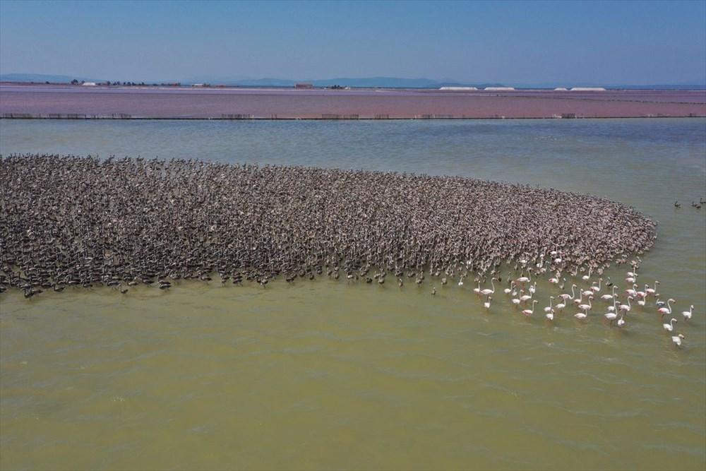 İzmir Kuş Cenneti'nde 18 bini aşkın yavru flamingo kreşte uçma hazırlığı yapıyor - 12