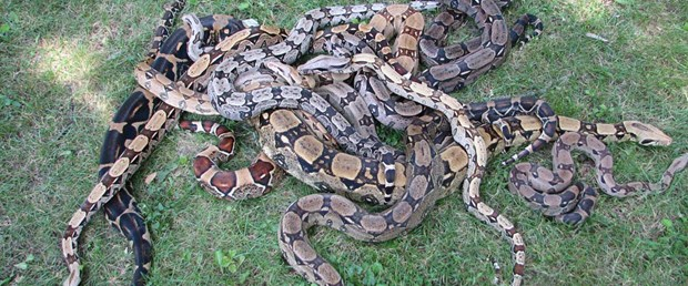 19 yılanla evde tek başına