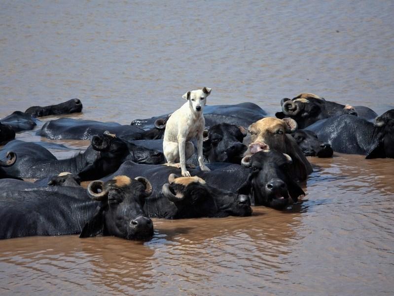 2012'nin en iyi hayvan fotoğrafları