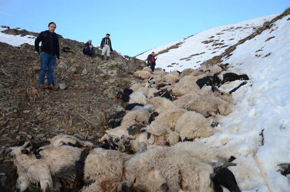 230 koyun art arda uçurumdan atladı