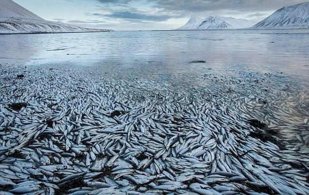 30 bin balığa oksijen kalmadı