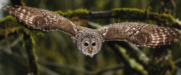 Owl (1).jpg