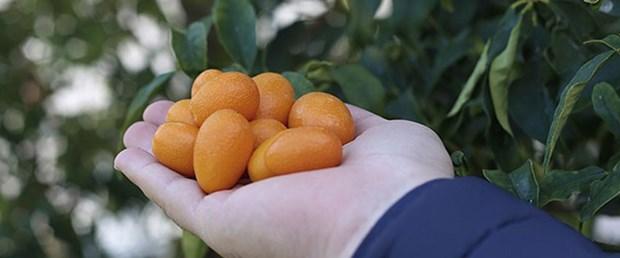 altın-portakal-15-03-20