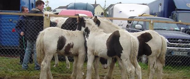 Atlar da kriz mağduru