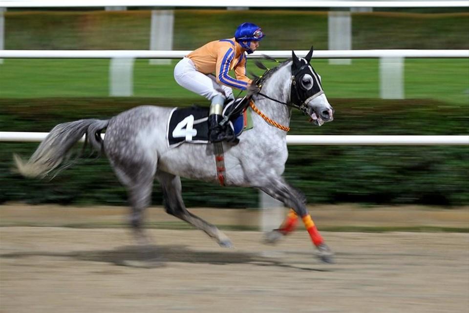 Atlara adanmış yaşamlar