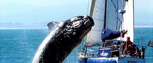Balina tekneye sıçradı