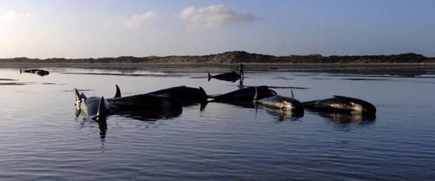 balina-avustralya-23-03-15