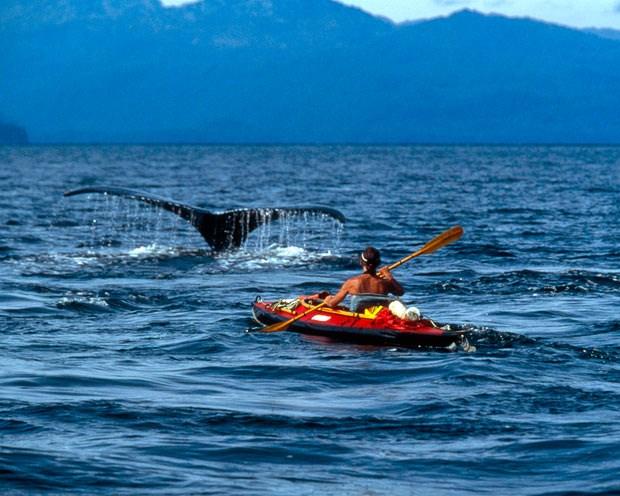 Balinalarla iç içe