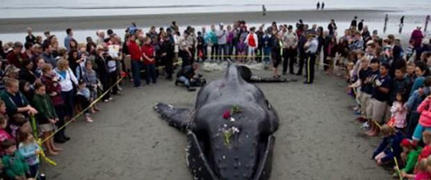 Balinaya hüzünlü cenaze töreni