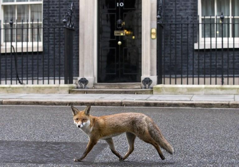 """İngiltere'de gazeteler bu fotoğrafı kullanarak başbakan David Cameron'u da alaya alıp """"O uyuruken 10 Numara'da tilkiler cirit atıyor"""" ifadelerini kullanarak haberler yaptı."""